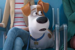 The Secret Life Of Pets 2 Trailer SpicyPulp