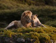 The Lion King Love SpicyPulp