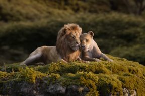The Lion King Love SpicyPulp
